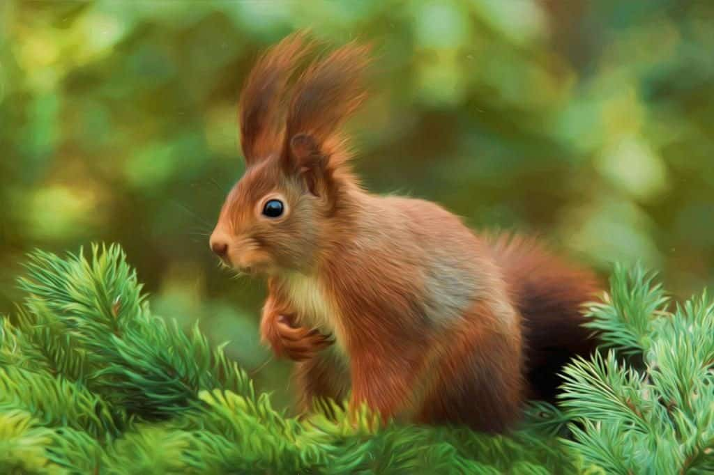 Eichhörnchen - pixabay.com