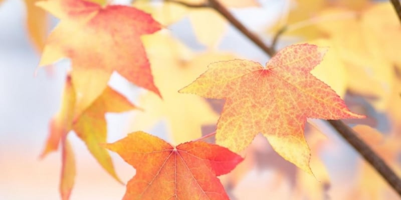 Herbstlaub - Foto: Stencil