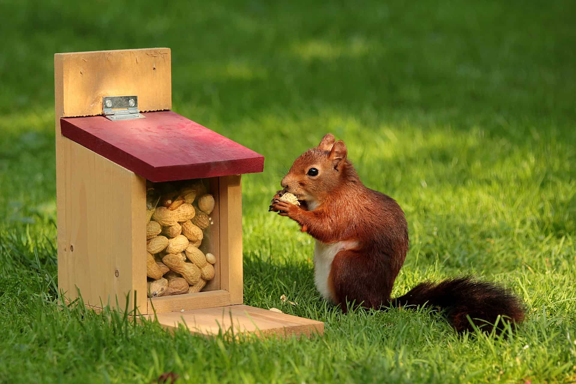 Eichhörnchen | Foto von Oldiefan/Pixabay